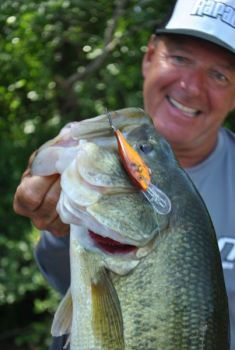 A crankbait can help you cover more water and find concentrations of bass once they move offshore.