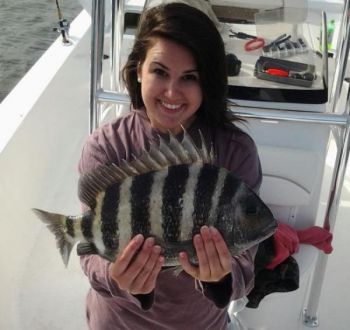 Sheepshead are a welcome addition to the June creel for fishermen around Fripp Inlet.