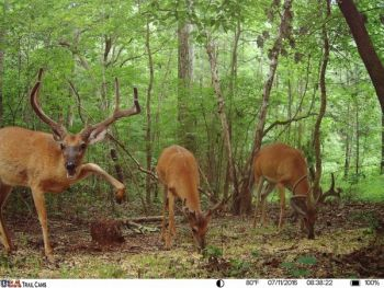 A USA Trail Cam captured this recent photo of these bucks on the outskirts of Raleigh, N.C.