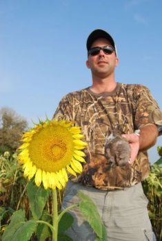 Sunflowers are a favorite food for doves, which head south late in the summer on an annual migration.