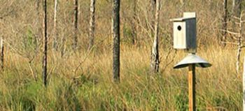 1000 wood duck boxes are available through the combined efforts of SCDNR and the S.C. Chapter of Ducks Unlimited.