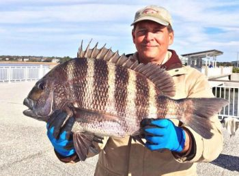 Gerald Grenier, aka Jiggin' Jerry, shows off a 9-pound, 1-ounce sheepshead caught from the Mount Pleasant pier on ultralight tackle.