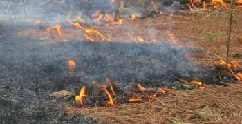 A low-intensity, controlled fire can greatly improve soil conditions entering the planting season, as well as clear out unwanted brush and small trees.