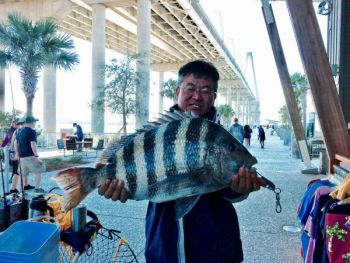 Seung Noh set the new Mt. Pleasant Pier sheepshead record with this brute.