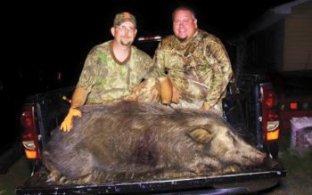 Using the right bait scents, while keeping your own scent hidden, is essential to hog hunting success.