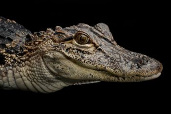 Two Ridgeland, S.C. men have been charged with harassing an alligator after posting photos of their interaction on social media.