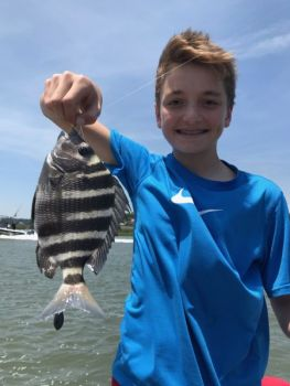 Sheepshead spend much of the summer around Murrells Inlet's jetties, offering anglers plenty of opportunity for great action.