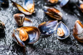 Beds of freshwater mussels will attract plenty of catfish, especially during summer months after the spawn.