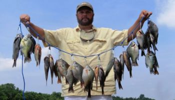 Guide Joe Dennis catches plenty of great bream in deep areas of the Santee Cooper lakes where he's hunting for crappie.
