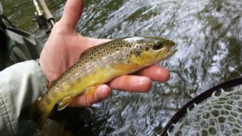 Deep Creek holds a lot of nice brown trout, plus some fish that often approach 15 to 20 inches long.
