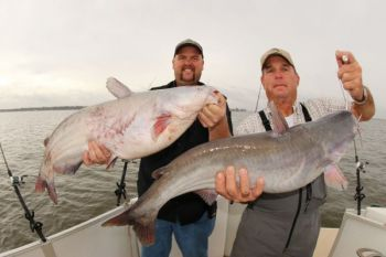 Catching big catfish is easier when you properly hook the right bait onto your hook.