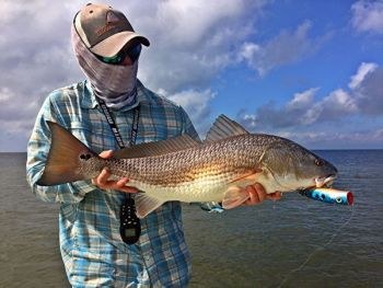 The clear waters around Wrightsville Beach make for great sight-fishing opportunities for redfish.