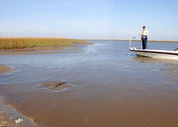 Glenn Finley said the marshes of Georgetown are very similar to what redfish anglers see in south Louisiana.