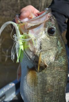 Windy conditions are perfect for fishermen to fish spinnerbaits around shallow cover.