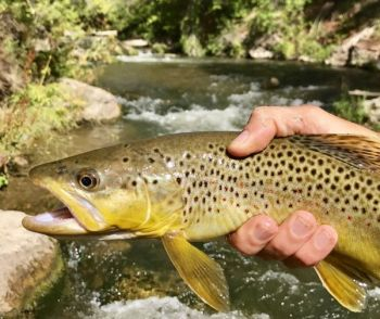 On Oct. 1, 34 trout waters in 20 WNC counties changed from Hatchery Supported Trout Waters to Delayed Harvest Trout Waters until June 1, 2018.