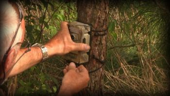 Keep your trail cameras active when the rut approches to decipher changes in deer and movements.