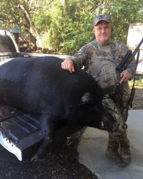 Joey Prince was hunting a soybean field in Orangeburg County, S.C. when he killed this beast, a 520-pound boar that took three shots before expiring.