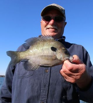 Plenty of big bream are swimming around the Santee Cooper lakes, ready to be caught by anglers who find brush piles in deeper water.