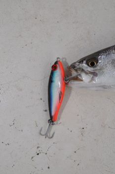 The 17MR MirrOlure relies on suspending above a trout when the retrieve is paused to draw trout strikes.