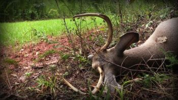 Late-season food sources can wind up being a trap for a buck that's survived until December.