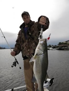 Striped bass move into South Carolina's Little River and the neighboring ICW when the water temperature drops into the low 60s and bait gangs up there.