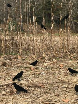 Mix up your decoy spread between fake birds on the ground and in trees or other places off the ground.
