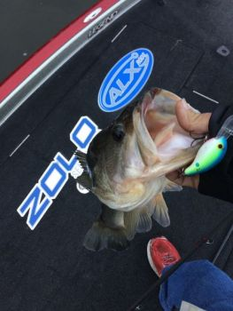 Don't put away crankbaits that work in deeper water when the first big wave of spawning bass move in early, because they often stay in relatively deep water.