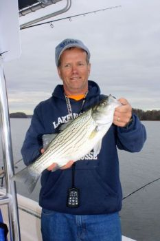 Hybrid bass have replaced stripers as No. 1 targets for many Lake Norman anglers and guides.