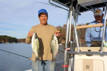 The N.C. Wildlife Resources Commission's decision to replace striped bass with hybrid bass in Lake Norman has paid off for guide Bob Curan.