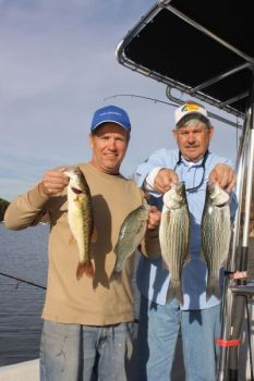 Spotted bass, white perch and hybrid bass often school together on Lake Norman during the winter and other, warmer months, because of their love of open, deeper water and current.