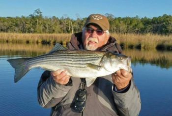 Guide Joe Ward shows off a nice striper caught in the Neuse River around New Bern.