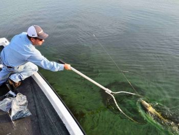 Carolina rigs will catch as many fish in spring as they will in summer if used correctly.