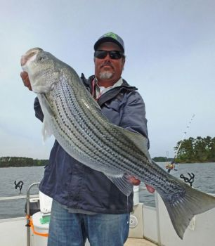 Big stripers are a big deal in April on Clarks Hill Lake.