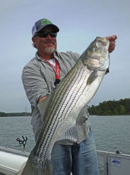 Anglers can target trophy sized fish at Clarks Hill by using larger baits.