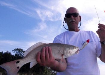 A MirrOlure Top Dog is a walk-the-dog topwater bait that imitates an injured baitfish and draws plenty of attention from red drum.
