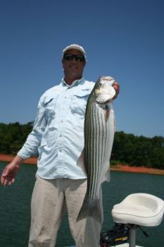 Guide Preston Harden said May is a great month to do battle with a really nice striped bass on Lake Hartwell.