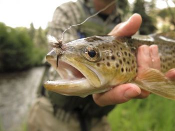 Delayed Harvest trout water open June 2 in North Carolina.