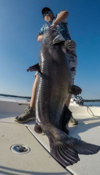 Do big blue cats bite during the summer? Guide Zakk Royce caught this 102-pound Lake Gaston monster in July 2017.