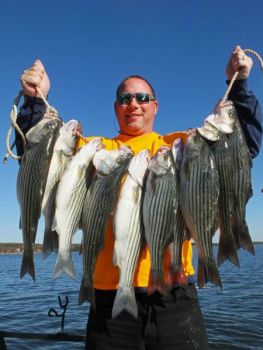 The resurgence of striper fishing at Lake Wateree, credited largely to higher stocking rates, has turned the lake back into a prime striper destination.