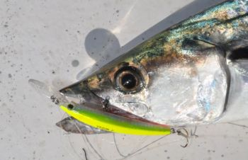 Hard-plastic diving plugs like Yo-Zuri's Crystal Minnow are an alternative to live-baiting or trolling spoons for mackerel.