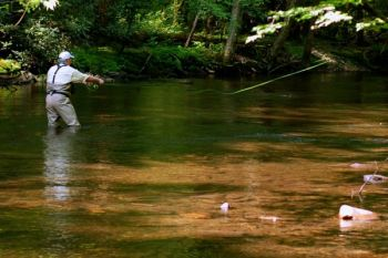 A fly fisher works a pool in Hazel Creek, a blue-ribbon trout stream in the Great Smoky Mountains National Park.