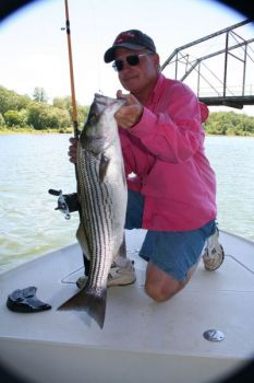 Guide Wendell Wilson said Lake Russell is full of stripers weighing up to 20 pounds or slightly heavier.