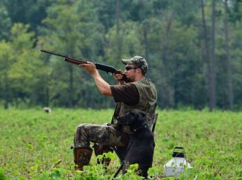 Wildlife agencies in both Carolinas have planted and managed fields for public dove hunting.