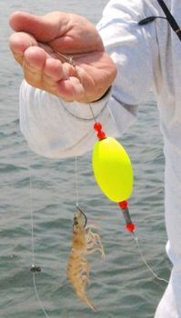 Suspending a live shrimp beneath a popping cork is a tried-and-true trout-catching tactic.