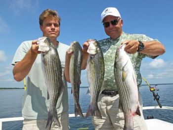 Before new regulations took effect in June, all of these Santee Cooper stripers would have been illegal to keep.