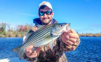 Beginning Oct. 1, anglers can keep two Albemarle Sound stripers at least 18 inches long per day.