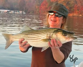 Lake Hickory produces plenty of nice-sized stripers in October.