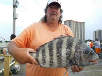 Derrick Rogers said Apache Pier is the best pier for sheepshead in the Myrtle Beach area.