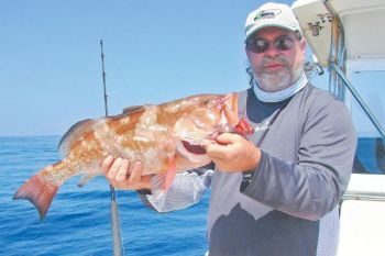 The author caught this red grouper in the fall, when the popular bottomfish move closer to shore as the water cools.