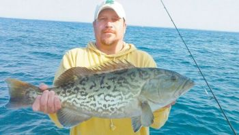 Gag grouper are one of a handful of grouper species that are extremely popular with sportfishermen.